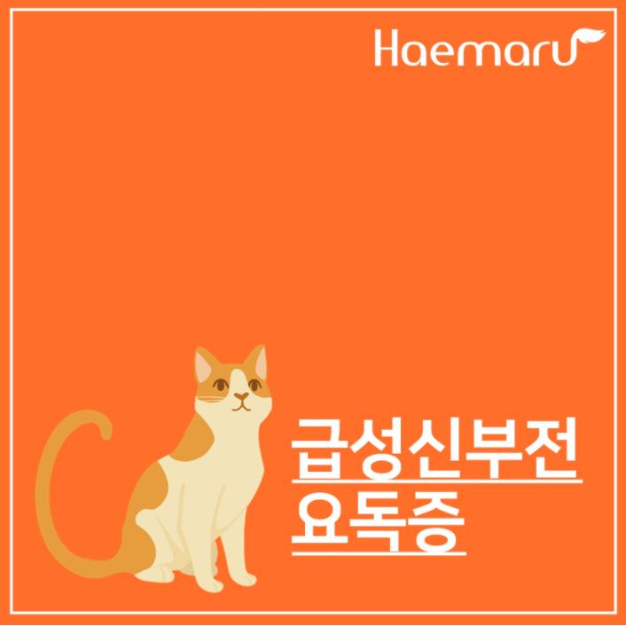 고양이 급성 신부전(신손상) 요독증 진료케이스 썸네일