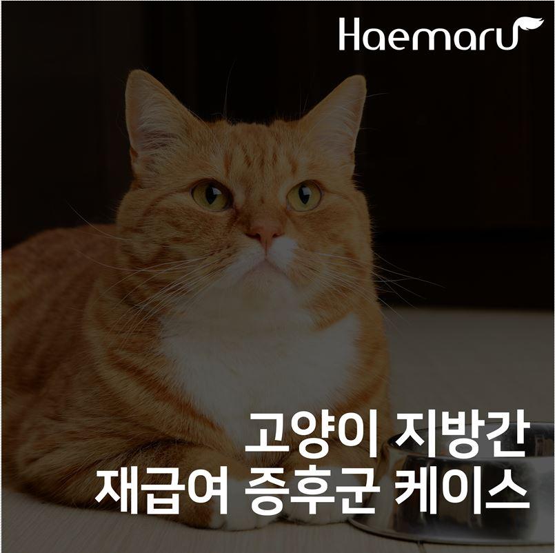 고양이 지방간, 재급여 증후군 치료케이스 썸네일