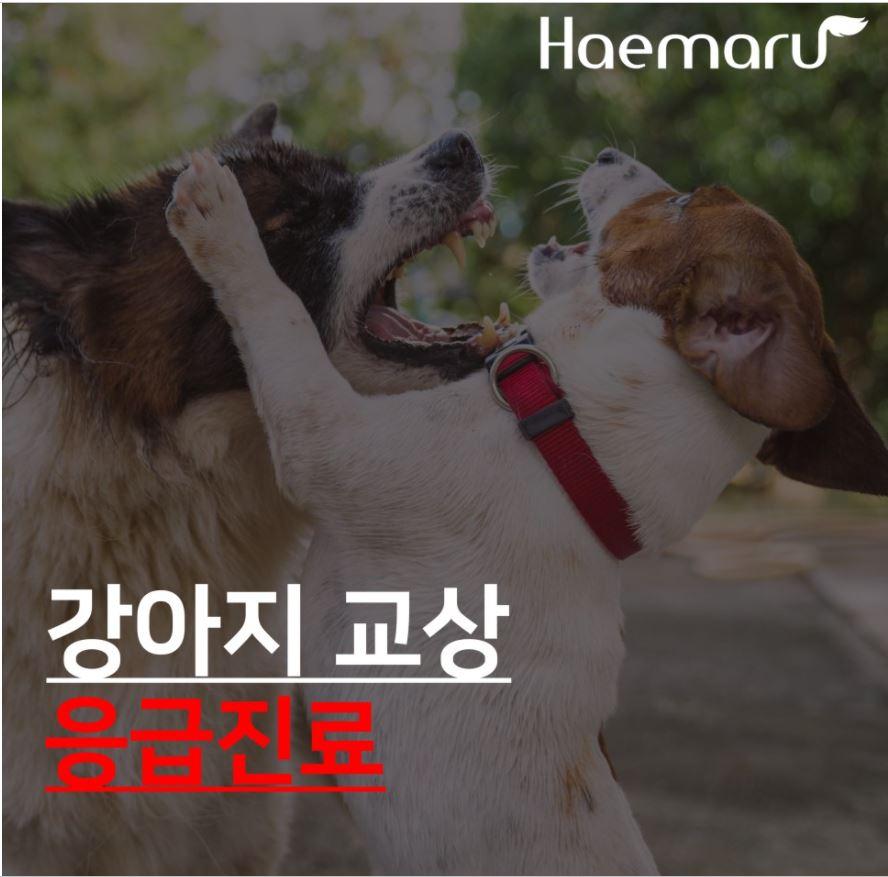 강아지가 물렸어요! 강아지 교상 응급처치, 응급진료 케이스 썸네일