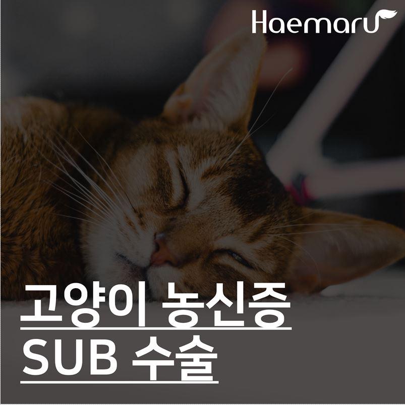 고양이 농신증, 신장을 살리는 SUB 수술케이스 썸네일