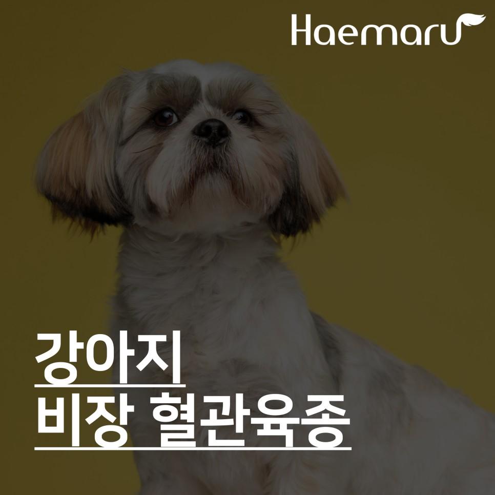강아지 비장 혈관육종 Splenic Hemangiosarcoma 썸네일