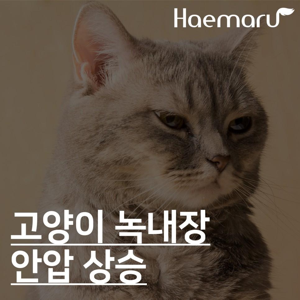 고양이 녹내장 치료케이스 썸네일