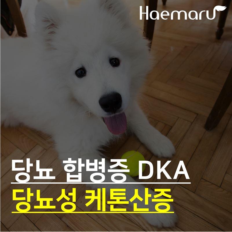 강아지 당뇨성 케톤산증 DKA 썸네일